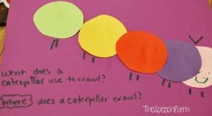 caterpillar questions